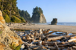 Beach at Mosquito Creek, Olympic National Park, Washington, USA. August 2015.  -  Kirkendall-Spring