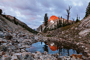 Summit of Mount Regan reflected in small tarn above Sawtooth Lake, Sawtooth Wilderness, Sawtooth National Recreation Area, Idaho, USA. July 2015.  -  Kirkendall-Spring