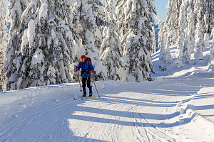 Cross country skier, Amabilis Mountain, Mount Baker-Snoqualmie National Forest, Washington, USA. December 2015. Model Released. - Kirkendall-Spring