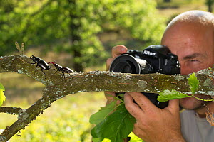 Nature photographer Solvin Zankl taking close up images of the Stag beetle (Lucanus cervus). Niedersachsische Elbtalaue Biosphere Reserve, Lower Saxonian Elbe Valley, Germany, June. - Solvin Zankl