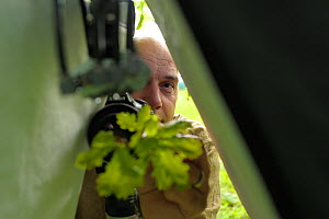 Nature photographer Solvin Zankl taking close up images of animals on oak leaves. Niedersachsische Elbtalaue Biosphere Reserve, Lower Saxonian Elbe Valley, Germany, June. - Solvin Zankl