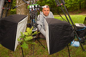 Nature photographer Solvin Zankl taking close up images of animals on Oak tree (Quercus) leaves. Niedersachsische Elbtalaue Biosphere Reserve, Lower Saxonian Elbe Valley, Germany, June 2013.  -  Solvin Zankl