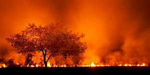 Grass fire at night in Pantanal, Brazil. - Bence  Mate