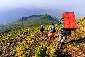 Porters carrying luggage and equipment down from the Nyiragongo Volcano, Democratic Republic of Congo (RDC). September 2015.  -  Christophe Courteau