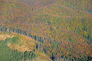 Aerial view of deforestation in the Sureanu Mountains.A logging vehicle is visible. Carpathians, Romania. October, 2014.  -  Zoltan Nagy