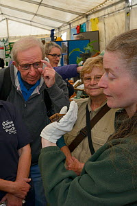 Samantha Pickering showing a Noctule bat (Nyctalus noctula) to members of the public at an outreach event, Boscastle, Cornwall, UK, October. - Nick Upton