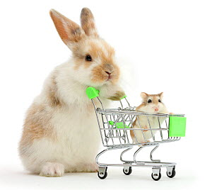 Young Rabbit with Roborovski hamster in shopping trolley. NOT AVAILABLE FOR BOOK USE  -  Mark Taylor