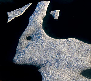 Sea ice  in shape of a hare or rabbit,  Nunavut, Canada, August.  -  Pal Hermansen