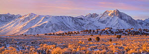 Sunrise over Mt Morrison in the far distance, near Convict Lake, Sierra Nevada, California, USA January  -  Floris  van Breugel