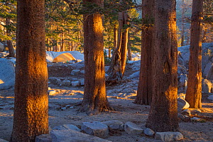 Camping in Big Pine Lakes, Sierra Nevada, Sequoia National Park, California, USA, May - Floris  van Breugel
