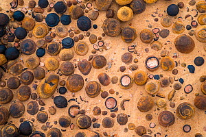 A diverse and natural array of Moqui Marbles on the slickrock landscape of Escalante National Monument, Utah, USA, October - Floris  van Breugel