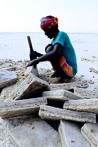 Salt extraction at Lake Assale on the Danakil depression, Afar man cuts salt blocks for trade. Afar Region, Ethiopia, Africa. November 2014.  -  Enrique Lopez-Tapia