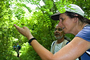 Anne Savage and Luis Soto from Project / Proyecto Titi looking at bugs on a leaf, in tropical tropical forest, Colombia. Critically endangered species.  -  Lisa  Hoffner