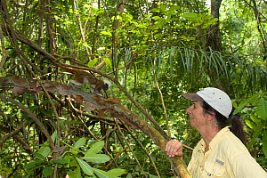 Anne Savage director of Project / Proyecto Titi observing wild Cotton top tamarin (Saguinus oedipus) in tropical dry forest, Colombia, July 2008. Critically endangered species.  -  Lisa  Hoffner