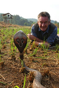 Presenter Nigel Marven with Spectacled cobra (Naja naja) in a paddy field, India. November 2015 - Michael Hutchinson
