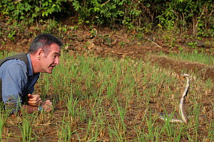 Presenter Nigel Marven with Spectacled cobra (Naja naja) in a paddy field, India, November 2015. - Michael Hutchinson