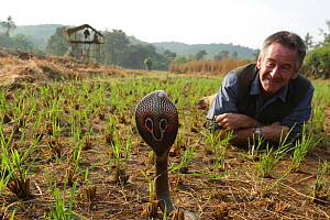 Presenter Nigel Marven with Spectacled cobra (Naja naja) in a paddy field, India, November 2015 - Michael Hutchinson