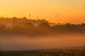 Landscape of London at dawn with fog from Hampstead Heath, London, England, UK. November 2014.  -  Matthew Maran