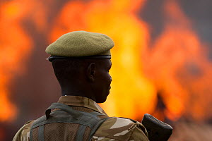 Kenya Wildlife Service (KWS) guard watching as piles of African elephant ivory are burnt. This burn included over 105 tons of elephant ivory, worth over $150 million. Nairobi National Park, Kenya, 30t... - Jabruson