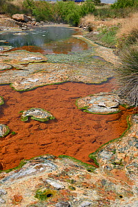 Thermal river, fed with boiling water from hot springs, with colourful growths and scummy crusts of blue-green algae, Lisvori, Polychnitos, Lesbos / Lesvos, Greece, May 2013. - Nick Upton