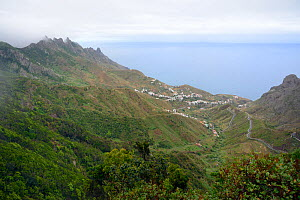 Overview of Taganana village and valley flanked by subtropical Laurel  forests and extinct volcanoes in the cloud-shrouded Anaga mountains, Anaga Rural Park,Tenerife, May.  -  Nick Upton