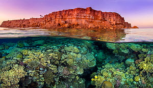 Rich coral growth, with a pair of Exquiste butterflyfish (Chaetodon austriacus), flourishes beneath the barren desert cliffs in the Red Sea. Taken at sunset. Ras Katy, Sinai, Egypt. Gulf of Aqaba, Red...  -  Alex Mustard