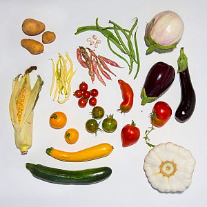 Vegetables originating  from South America that have successfully acclimatized in Europe: aubergine, beans, courgette / zuchini,  maize, red pepper, potato, squash and tomato  -  Cyril Ruoso