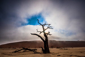 A misty sunrise over tree silhouette in Deadvlei, Namibia - Wim van den Heever
