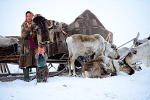 Nenet woman preparing for spring migration dressing herself and her son in traditional winter boots and coat made with reindeer skin. The temperature is below zero. Yar-Sale district, Yamal, Northwest... - Eric Baccega