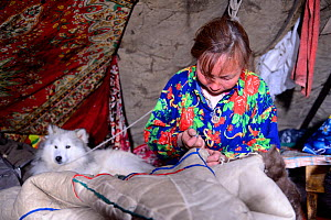 Nenet woman sewing coat (malitsa) made with reindeer skin and fur, inside tent with pet dog. Yar-Sale district. Yamal, Northwest Siberia, Russia. April  2016. - Eric Baccega