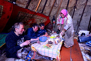 Nenet reindeer herders, eating bread, raw reindeer meat and tea inside reindeer skin tent. Yar-Sale district, Yamal, Northwest Siberia, Russia. April 2016. - Eric Baccega