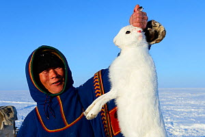 Nenet herder holding arctic hare (Lepus timidus) caught in the tundra. Yar-Sale district. Yamal, Northwest Siberia, Russia. April  2016. - Eric Baccega