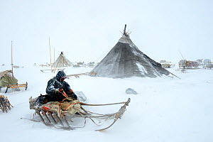 Nenet herder fixing sled at camp in blizzard. Yar-Sale district, Yamal, Northwest Siberia, Russia. April 2016.  -  Eric Baccega