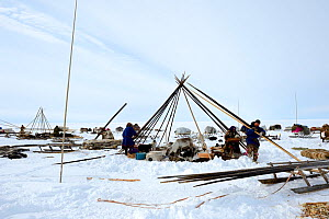 Nenet herders dismantling tent in tundra. Yar-Sale district. Yamal, Northwest Siberia, Russia. April  2016.  -  Eric Baccega