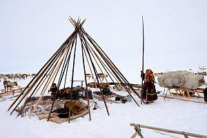 Nenet herders erecting tent on tundra. Yar-Sale district, Yamal, Northwest Siberia, Russia. April 2016.  -  Eric Baccega