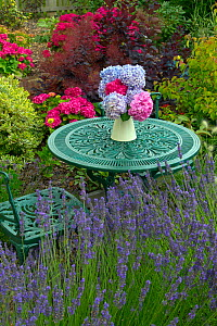 Hydrangeas (Hydrangea sp) flower arrangement on  garden table, England, UK, August. - Ernie  Janes