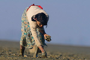 Rakhine woman gathering clams by probing holes with her finger. Subsistence hunting pressure is intense on both marine and terrestrial wildlife in the region, Rakhine State, Maynmar, 2012 - Gerrit  Vyn