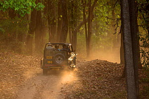 Jeep with tourists driving on track through the sal forest in late afternoon sun, Kanha National Park, Madhya Pradesh, India  -  David  Pattyn
