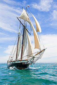 Californian, a reproduction of an 1851 revenue cutter,San Diego Maritime Museum, USA  -  Doc White