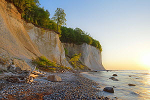Chalk cliffs at Pirate bay on the Limestone coast of the Baltic Sea. Ruegen, Jasmund National Park, Ancient Beech Forest (Fagus sylvatica) UNESCO Heritage Site, Germany, Europe. May 2016.  -  Sandra Bartocha