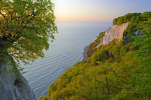 European beech (Fagus sylvatica) on the Baltic Sea with Victoria-lookout from Koenigstuhl. Ruegen, Jasmund National Park, Ancient Beech Forest UNESCO Heritage Site, Germany, Europe. May 2016.  -  Sandra Bartocha