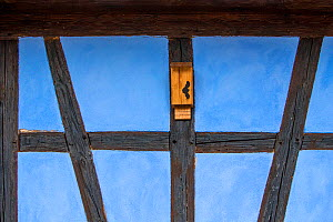 Bat box on wall of half-timbered house, Alsace, France.  -  Klein & Hubert