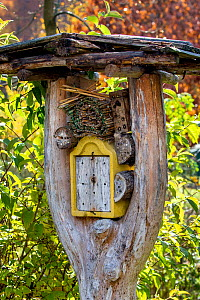 Insect hotel in forked trunk, autumn, Germany.  -  Klein & Hubert