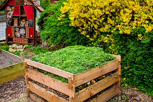 Compost bin and insect home in garden in spring, France.  -  Klein & Hubert