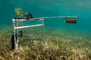 BRUV (Baited remote underwater video) monitoring by  MAR Alliance. A minimal or non invasive research of large marine fish, sharks, rays and turtles. Lighthouse Reef Atoll,  Belize. May 2015.  -  Pete Oxford