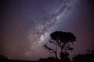 Milky way and Acacia tree over De Hoop Nature Reserve, Western Cape, Overberg, South Africa. June 2013.  -  Nick Turner