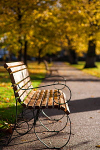 Empty bench in Pittville Park in the autumn, Cheltenham, Gloucestershire, UK. November 2013. - Nick Turner