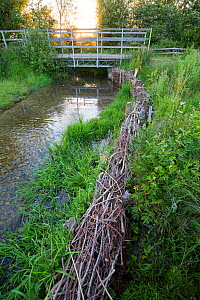 River Eye at Greystones Farm, Gloucestershire Wildlife Trust (GWT), Nature Reserve, Gloucestershire, UK. Riverbank restored with hazel wattles to desilt river. June 2016.  -  Nick Turner