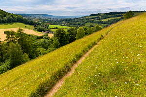 Unimproved grassland in flower at Swift's Hill, Site of Special Scientific Interest (SSSI), Stroud, Gloucestershire, UK. June 2015.  -  Nick Turner