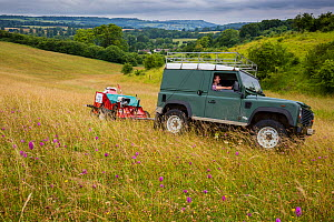Seed harvesting and Pyramidal orchid (Anacamptis pyramidalis) on land restored from arable to wildflower rich grassland, Syreford, Gloucestershire, UK. July 2015. - Nick Turner